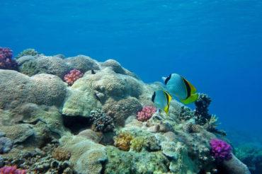 29.märts Hurghadasse!